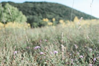 hudsonvalleynyphotographer-2212